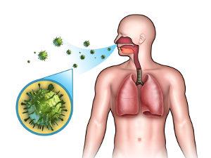 схема заражения инфекцией
