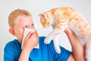аллергия на кота у мальчика