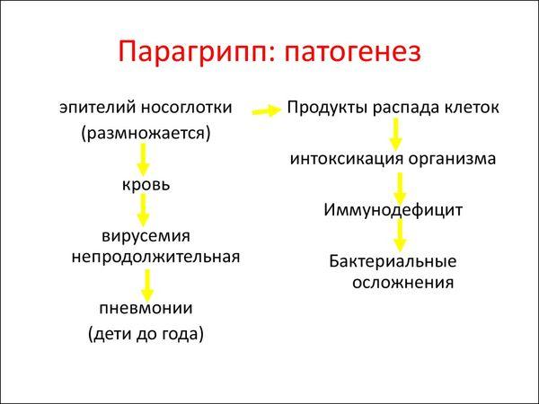 парагрипп