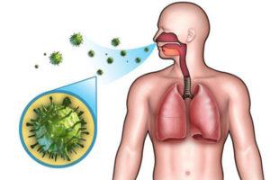 вирусы болезни