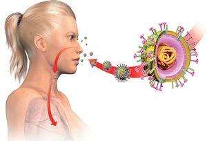 вирус попадает в организм